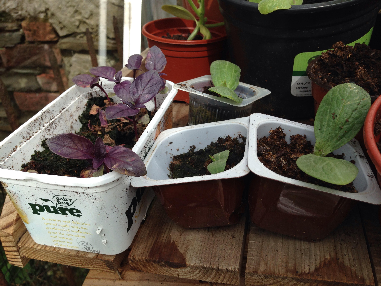 Junk gardening! | guerrilla beets